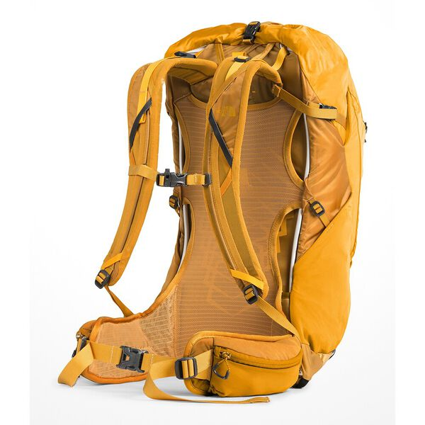 HYDRA 26, CITRINE YELLOW-ZINNIA ORANGE, hi-res